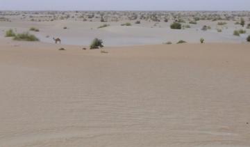 medium_desert.jpg