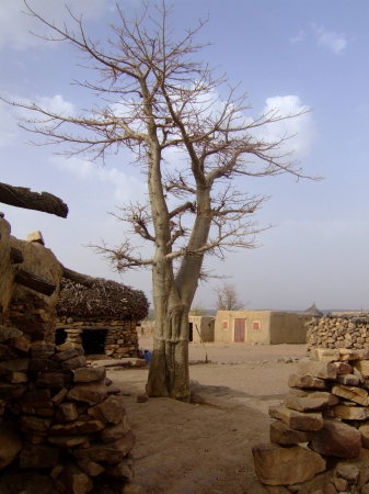 medium_village_baobab_palabre.jpg