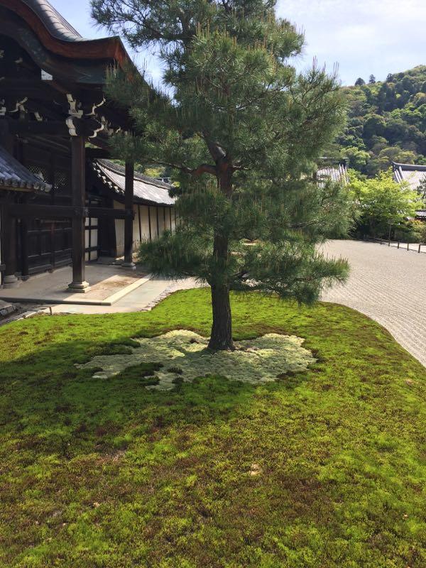 kyoto,japon,arashiyama